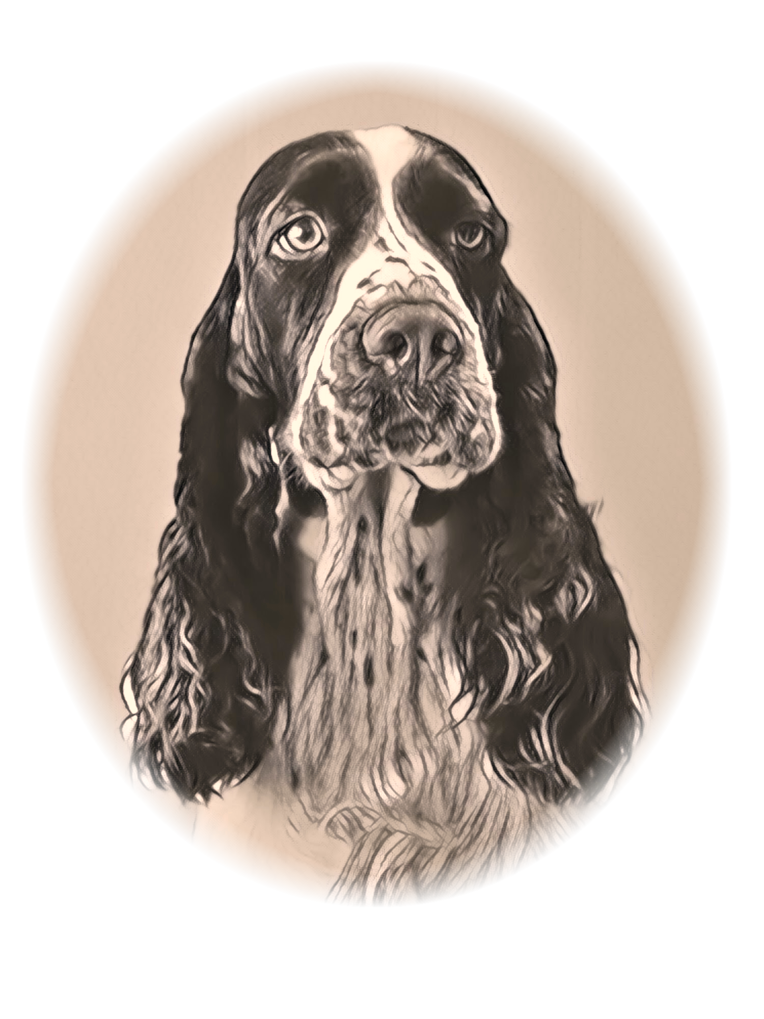 English Springer Spaniel vom Birkensee Logo